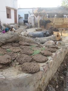 Barso village outside of Bharatphur, India