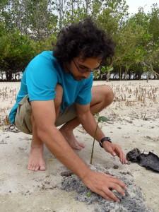 adam pervez mangrove trees phillipines