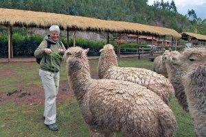 Feeding Alpacas in Peru's Sacred Valley