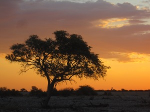 Sunset at the Watering Hole - Etosha National Park, Namibia