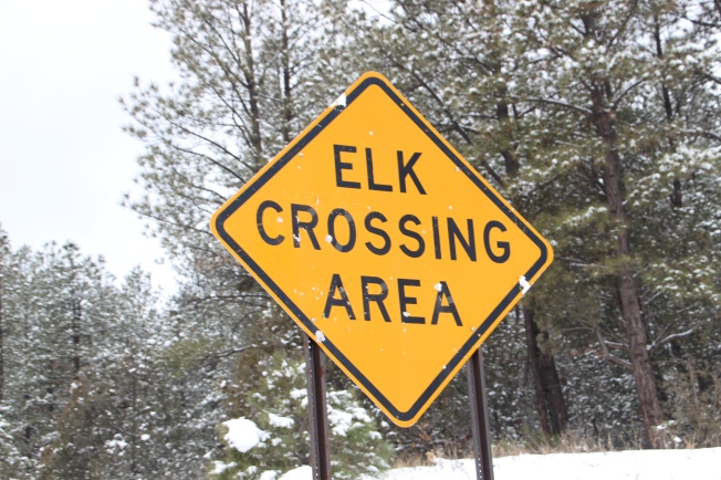 look out for elk