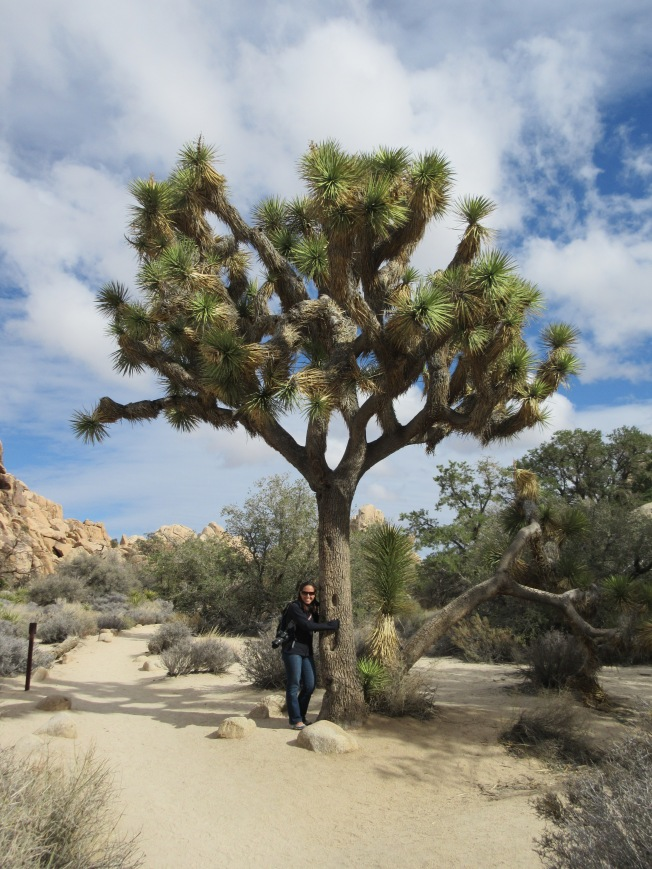 at Joshua Tree