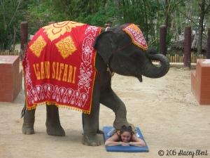 Elephant massage in Thailand-Stacey Ebert