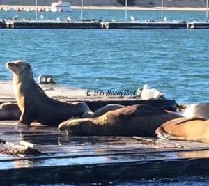 Sea Lions on the SEAL Tour - thegiftoftravel.wordpress.com